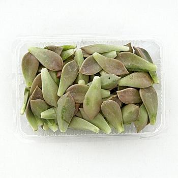 台灣石蓮花(300g+-5%/盒)