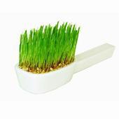 《Light+Bio》Brush your life牙刷陶瓷植栽-晴思草(綠色)