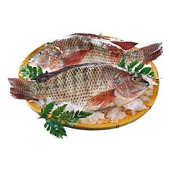 吳郭魚(500~700g/尾)