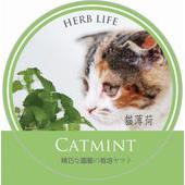 《Light+Bio》樂活栽培罐Ⅱ- 貓薄荷(綠色)