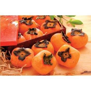 全聯農產 台灣紅柿(約400公克+-5%/盒)