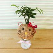 《Light+Bio》KITTY貓造型苔球(竹柏)