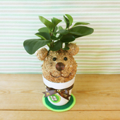 《Light+Bio》幸福苔球-熊丸(圓葉椒草)