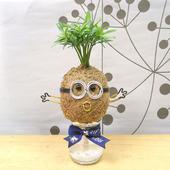 《Light+Bio》幸福苔球-小兵造型苔球