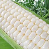 《果之家》爆汁香甜水果玉米(3台斤/約8支入)