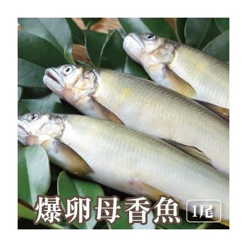築地藏鮮 宜蘭冷泉爆卵母香魚-單筆下單滿10尾免運(100g±10%/尾*1尾)