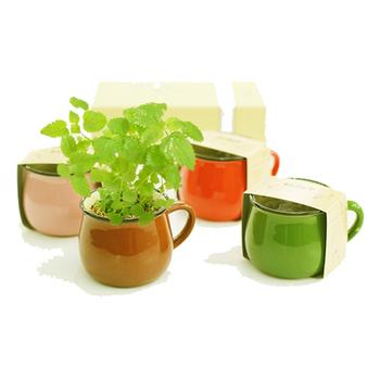 《樂生活》療癒系大肚杯造型盆栽(棕色-甜羅勒)