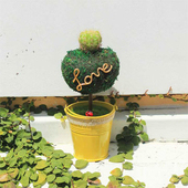 《Light+Bio》繽紛幸福苔樹仙人掌植栽(黃色)