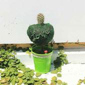 《Light+Bio》繽紛幸福苔樹仙人掌植栽(綠色)
