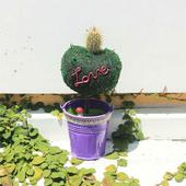 《Light+Bio》繽紛幸福苔樹仙人掌植栽(紫色)