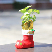 《Light+Bio》繽紛耶誕靴植栽