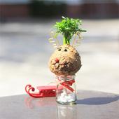 《Light+Bio》耶誕麋鹿苔球