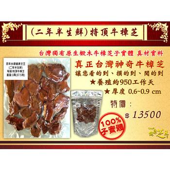 ★結帳現折★百年永續健康芝王 牛樟芝/菇(二年半特頂) 生鮮品 (37.5g /1兩)