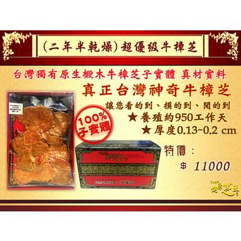 百年永續健康芝王 牛樟芝/菇(二年半超優級) 乾燥品 (11g /1兩)
