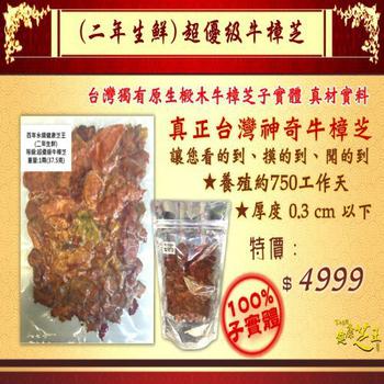 ★結帳現折★百年永續健康芝王 牛樟芝/菇(二年超優級) 生鮮品 (37.5g /1兩)