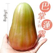 《鮮果日誌》高雄六龜鄉香水蓮霧(4台斤裝)