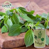 《iPant》易開罐頭花卉蔬果農場(九層塔)
