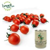 《iPant》易開罐頭花卉蔬果農場(小蕃茄)