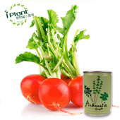 《iPant》易開罐頭花卉蔬果農場(櫻桃蘿蔔)