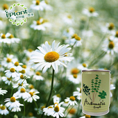 《iPant》易開罐頭花卉蔬果農場(小雛菊)