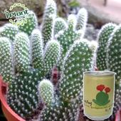 《iPant》易開罐頭花卉蔬果農場(仙人掌)