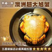 《幸福小胖》澳洲超大 旭蟹(600g ±5%)(1隻)