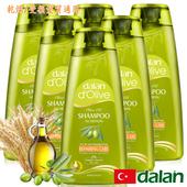 《土耳其dalan》橄欖油小麥蛋白修護洗髮露6入組(50mlx6)