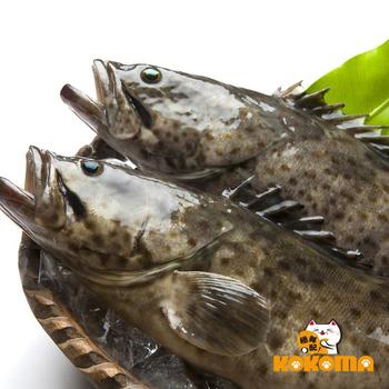 極鮮配 現撈急凍 台灣鮮嫩石斑魚(500G~600G/隻)(1隻)