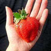 《鮮果日誌》日本進口空運草莓(5~10顆/入)(2入裝)