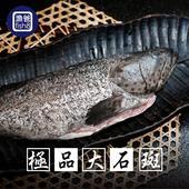《漁爸fish8》極品大石斑(1000g/尾)(1尾)