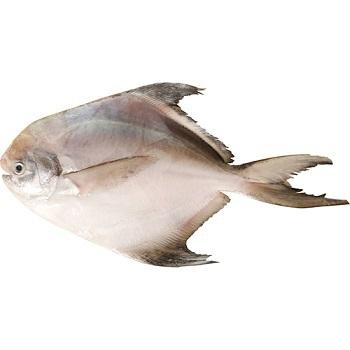白鯧(300~400克 / 尾)