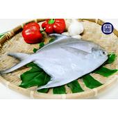 《漁爸fish8》白鯧魚(350g±10%/尾)(2尾)