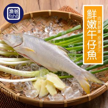 《漁爸fish8》鮮嫩午仔魚(200g-300g/尾)(3尾)
