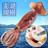 澎湖現撈大冰卷(150-200g/尾)