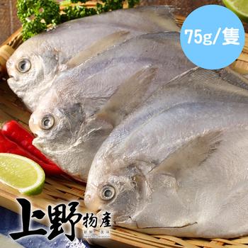《上野物產》野生小白鯧 ( 75g土10%/隻 )(24隻)
