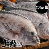 《上野物產》嚴選台灣鯛魚 (250g土10%/隻)(8隻)買就送:鮮脆刻花魷魚 (250g±10%) *1包