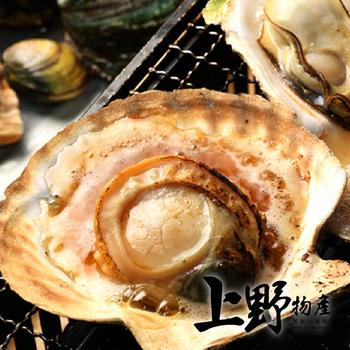 《上野物產》肥美半殼大扇貝 (500g土10%/7-8個/包)(5包)上野物產單筆滿$999送宜蘭薄鹽鯖魚(90g±10%)*2片