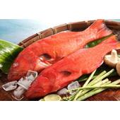 《上野物產》菲律賓燕尾紅條 (450g土10%/隻)(2隻)買就送:鮮脆刻花魷魚 (250g±10%) *1包