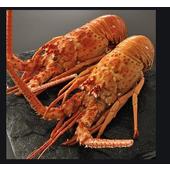 《上野物產》巴西生凍鮮龍蝦 (410g土10%/隻)(1隻)買就送:鮮脆刻花魷魚 (250g±10%) *1包